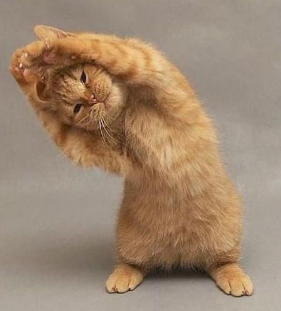 l-Kitty-yoga...-STRREEETTTCCCHHH